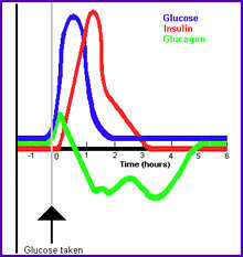 what is the relationship between cortisol and glucagon